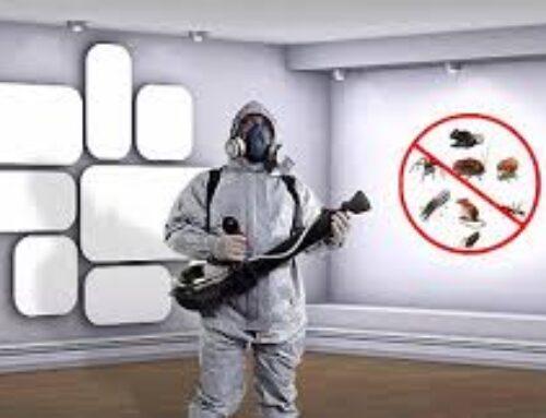 شركة مكافحة حشرات في راس الخيمة |0566300399| ابادة فورية